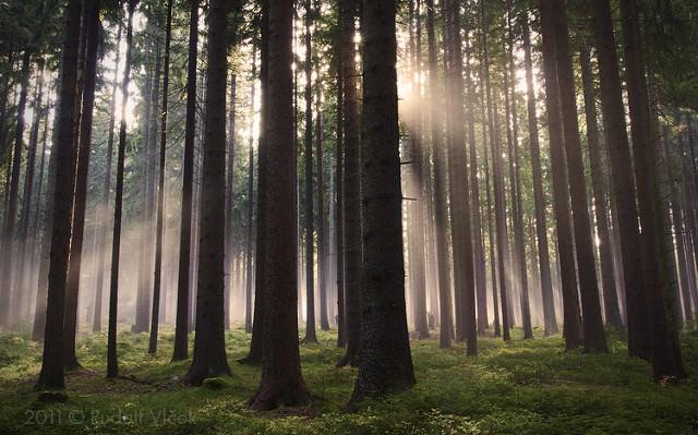Itération de l'application mobile basée sur les données: voir le bois des arbres